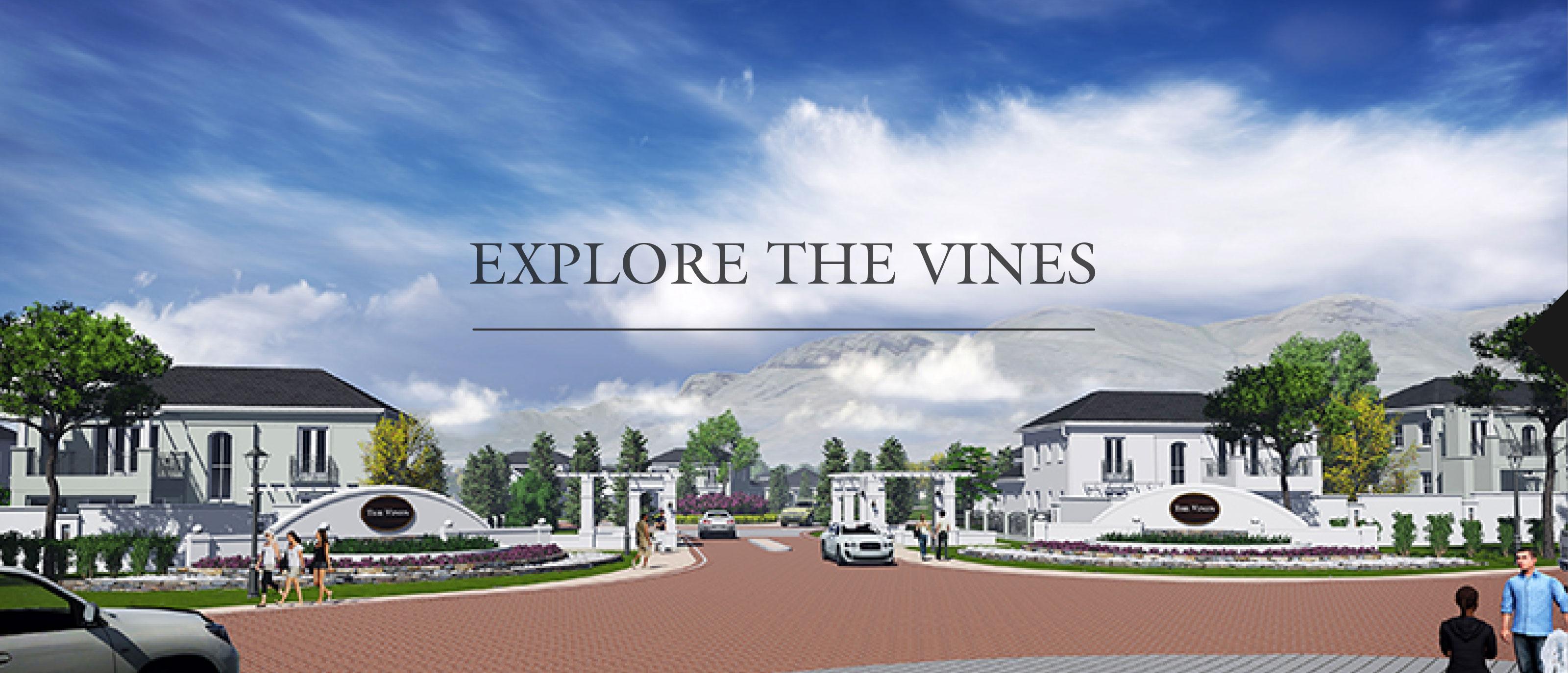 explore-vines